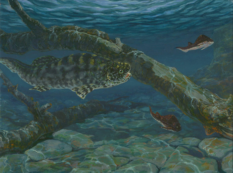 Coccosteus and Pterichthyodes - Middle DevonianIn a shallow lake    Devonian Amphibians