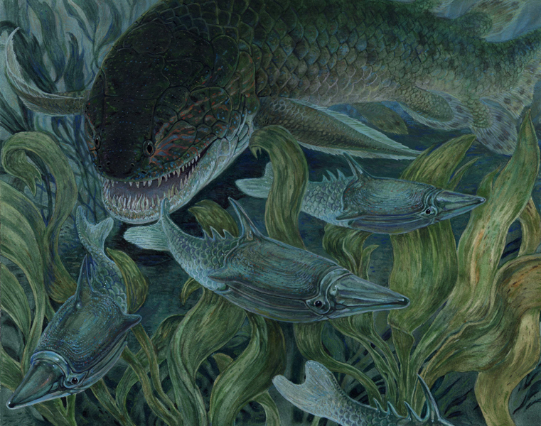 Porolepis and Pteraspis - Early DevonianPorolepis was one of the    Devonian Amphibians