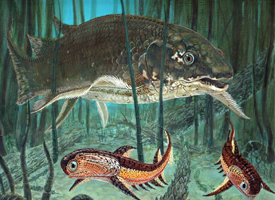 Dipterus and Climatius - Middle Devonian.  The extinct lungfish Dipterus swims by two acanthodian Climatius. These early fish bristled with defensive spines.