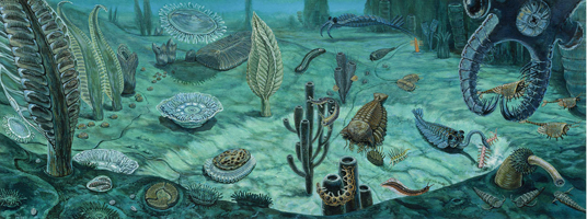 Ediacara / Burgess Shale - Pre to Middle Cambrian This illustration shows, on the left, the Ediacaran fauna, mostly sessile and filter feeding, contrasting with the explosion of Mid Cambrian Burgess Shale life forms on the right, like Anonmalocaris, Hallucigenia, and Pikaia, with their novel body plans, armor and anatomical inventions enabling predation.