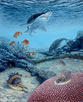 Eocene. The Eocene gastropods Melongea, Cassis, and Pterynotus shared the near shore habitat with sharks, dugongs and Squirrel Fish.