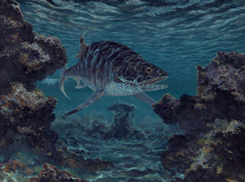 Hypsocormus - Middle to Late Jurassic.  This fast swimming predator had features in common with both primitive teleosts and advanced neopterygians.